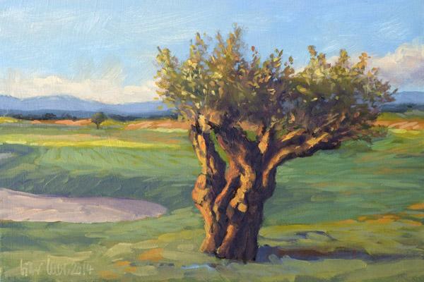 Golf Club Son Gual Mallorca, Olive tree